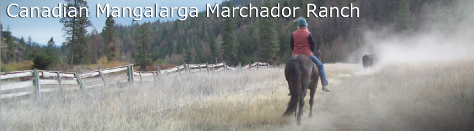 Canadian Mangalarga Marchador Ranch